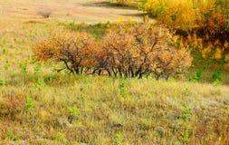 Árboles de la caída Foto de archivo libre de regalías