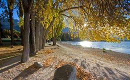 Árboles de la caída al lado del lago imagenes de archivo