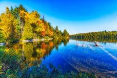 Árboles de la caída con el lago Fotos de archivo