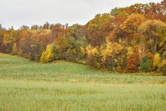 Árboles de la caída con las colinas del país del balanceo fotos de archivo libres de regalías