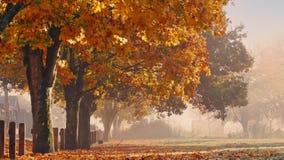 Árboles de la caída con las hojas y Person Walking que caen almacen de video