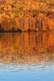 Árboles de la caída en Nuevo Brunswick Canadá Fotos de archivo libres de regalías