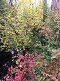 Árboles de la caída en parque Imagen de archivo libre de regalías