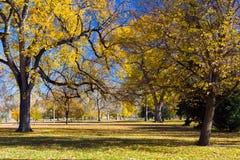 Árboles de la caída en parque de la ciudad Imágenes de archivo libres de regalías