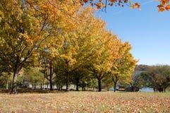 Árboles de la caída en Tennessee del este Foto de archivo libre de regalías