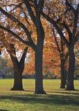 Árboles de la caída en una tarde soleada en Washington Park, Denver fotografía de archivo libre de regalías