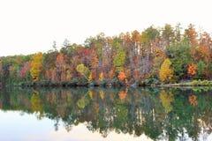 Árboles de la caída a lo largo de un lago Fotos de archivo libres de regalías