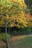 Árboles de la caída que cambian color Imagenes de archivo