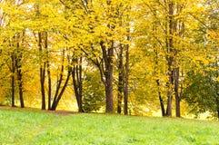 Árboles de la caída y hojas caidas en el parque Día brillante pero nublado Fotografía de archivo libre de regalías