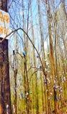 Árboles de la cerveza Foto de archivo libre de regalías