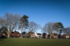 Árboles de la ciudad en invierno Imagenes de archivo