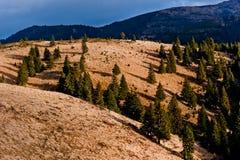 Árboles de la colina Foto de archivo