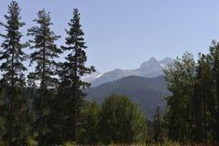 Árboles de la conífera en las montañas Fotografía de archivo