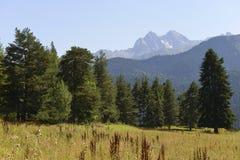 Árboles de la conífera en las montañas Foto de archivo
