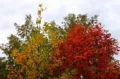 Árboles de la corona en otoño Imágenes de archivo libres de regalías