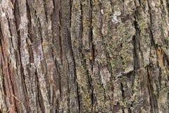 Árboles de la corteza Fotografía de archivo