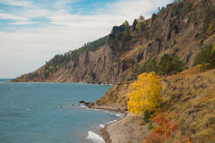 Árboles de la costa y del otoño Imágenes de archivo libres de regalías