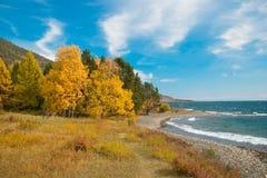 Árboles de la costa y del otoño Foto de archivo libre de regalías