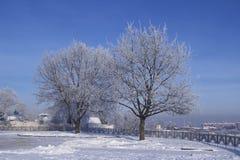 Árboles de la escarcha en parque Imágenes de archivo libres de regalías
