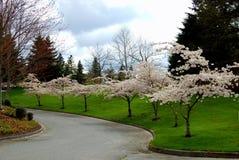 Árboles de la flor Foto de archivo libre de regalías
