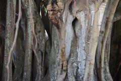 Árboles de la Florida Imágenes de archivo libres de regalías