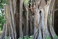 Árboles de la Florida Fotos de archivo libres de regalías
