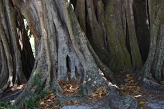 Árboles de la Florida Fotos de archivo