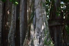 Árboles de la Florida Imagenes de archivo