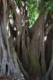 Árboles de la Florida Foto de archivo libre de regalías