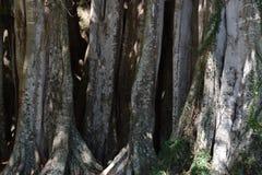 Árboles de la Florida Imagen de archivo libre de regalías