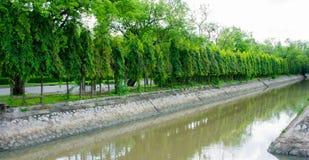 Árboles de la fosa y de la pared del templo Fotografía de archivo libre de regalías