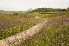 Árboles de la granja y de melocotón en el campo Foto de archivo libre de regalías