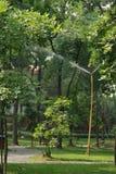 Árboles de la irrigación Imagen de archivo libre de regalías