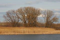 Árboles de la isla del río en primavera temprana fotografía de archivo