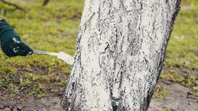 Árboles de la lechada de cal en estación de primavera almacen de video
