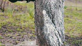 Árboles de la lechada de cal en estación de primavera almacen de metraje de vídeo