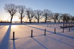 Árboles de la mañana del invierno Fotografía de archivo