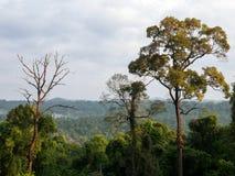 Árboles de la montaña Fotos de archivo libres de regalías