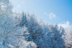 Árboles de la montaña cubiertos con escarcha Imagen de archivo libre de regalías