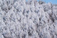 Árboles de la montaña cubiertos con escarcha Fotografía de archivo libre de regalías