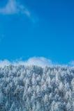 Árboles de la montaña cubiertos con escarcha Fotos de archivo