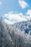 Árboles de la montaña cubiertos con escarcha Foto de archivo