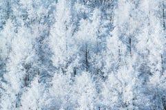 Árboles de la montaña cubiertos con escarcha Fotografía de archivo