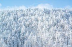 Árboles de la montaña cubiertos con escarcha Fotos de archivo libres de regalías
