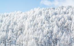 Árboles de la montaña cubiertos con escarcha Imágenes de archivo libres de regalías
