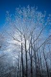 Árboles de la montaña cubiertos con escarcha Imagenes de archivo