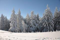 Árboles de la montaña cubiertos con nieve Imagen de archivo libre de regalías