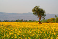 Árboles de la montaña a las flores. Fotografía de archivo libre de regalías