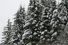 Árboles de la montaña Nevado en el soporte Hood National Forest Imágenes de archivo libres de regalías