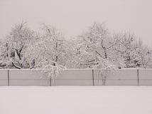 Árboles de la nieve Imágenes de archivo libres de regalías